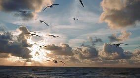 Volée des oiseaux alimentant à la main à mouettes le coucher du soleil sur la mer banque de vidéos