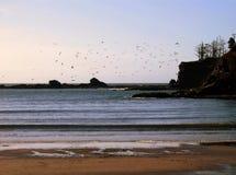 Volée des oiseaux au-dessus de la baie de coucher du soleil Photo libre de droits