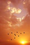 Volée des oiseaux au lever de soleil ou au coucher du soleil Photos stock