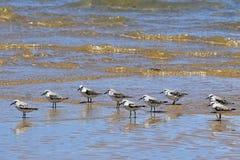 Volée des oiseaux dans l'eau, île portugaise, Mozambique Images libres de droits