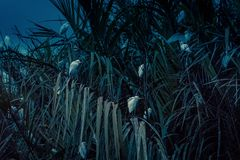 Volée des oiseaux dans la lagune la nuit près de Tangalle, Sri Lanka Photos libres de droits