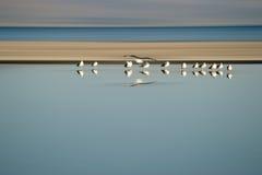 Volée des oiseaux dans la rangée Images libres de droits