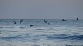 Volée des oiseaux de mer volant au-dessus de l'océan pacifique banque de vidéos