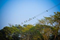 Volée des oiseaux de moineau de migration se reposant sur un fil contre le ciel bleu Paysage rural d'été de belle campagne d'un r photographie stock libre de droits