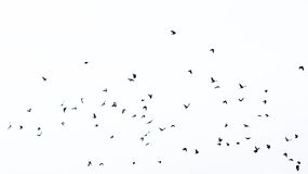 Volée des oiseaux en silhouette photos stock