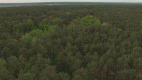 Vol aérien au-dessus d'une forêt conifére mélangée clips vidéos