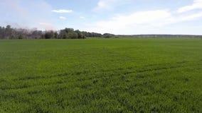 Vol aérien au-dessus de champ d'usine d'herbe verte banque de vidéos