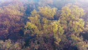 Vol aérien au-dessus de la forêt d'automne couverte de feuilles de brouillard, de jaune, vertes et d'orange clips vidéos