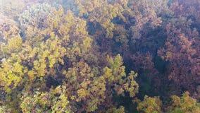 Vol aérien au-dessus de la forêt d'automne couverte de feuilles de brouillard, de jaune, vertes et d'orange banque de vidéos