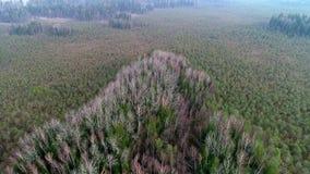 Vol aérien de bourdon au-dessus de marais et de forêt clips vidéos