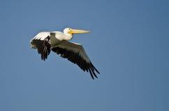 Vol américain de pélican blanc dans un ciel bleu Photo libre de droits