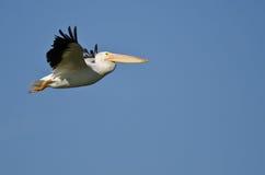 Vol américain de pélican blanc dans un ciel bleu Photographie stock libre de droits
