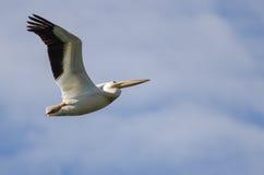 Vol américain de pélican blanc dans un ciel bleu Photographie stock