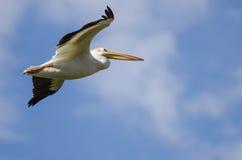Vol américain de pélican blanc dans un ciel bleu nuageux Images stock