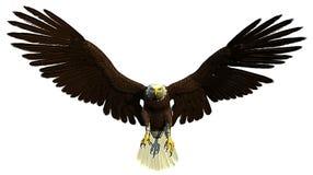 Vol américain et chasse d'aigle chauve illustration de vecteur