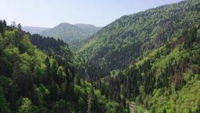 Vol au-dessus de belle forêt verte luxuriante avec la petite rivière et les arbres denses clips vidéos