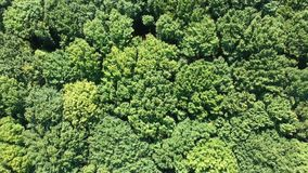 Vol au-dessus de forêt banque de vidéos