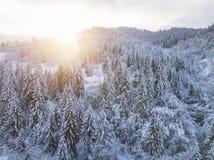 Vol au-dessus de forêt conifére de montagne neigeuse au coucher du soleil Le su clair Images libres de droits