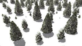 Vol au-dessus de forêt neigeuse de sapin d'hiver Photographie stock libre de droits