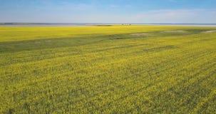 Vol au-dessus de ravin vert entre de vastes champs jaunes de viol clips vidéos