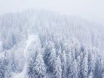Vol au-dessus de tempête de neige dans une forêt conifére de montagne neigeuse, unc Photo libre de droits
