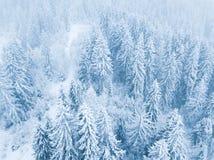 Vol au-dessus de tempête de neige dans une forêt conifére de montagne neigeuse, unc Photos stock