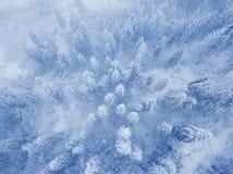 Vol au-dessus de tempête de neige dans une forêt conifére de montagne neigeuse, unc Images libres de droits