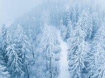 Vol au-dessus de tempête de neige dans une forêt conifére de montagne neigeuse, unc Photo stock