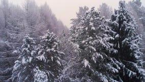 Vol au-dessus des dessus des arbres neigeux dans la forêt d'hiver banque de vidéos