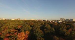 Vol au-dessus des dessus des arbres Photo libre de droits