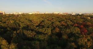 Vol au-dessus des dessus des arbres Photographie stock