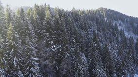 Vol au-dessus des sapins neigeux dans Bukovel, montagnes carpathiennes, Ukraine 4K clips vidéos