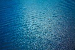 Vol blanc de mouette au-dessus des ondes bleues profondes Photo stock
