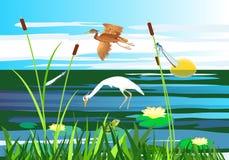 Vol blanc et rouge de héron au-dessus du lac, gragonflies, marécage photo libre de droits
