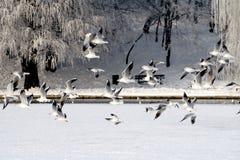 vol congelé Images stock