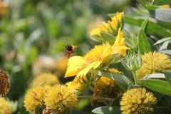 vol d'abeille Image libre de droits