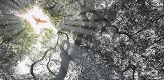 Vol d'aigle d'automne sur le trou de cime d'arbre Photos libres de droits