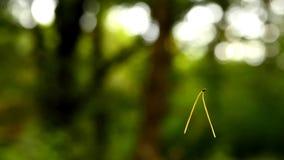 Vol d'aiguille de pin dans le ciel clips vidéos