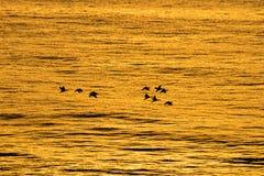 Vol d'aube Photo stock