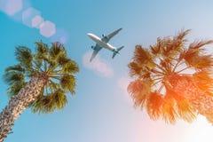 Vol d'avion de passager au-dessus des palmiers contre le ciel bleu photo libre de droits