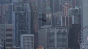 Vol d'Eagle en Hong Kong banque de vidéos