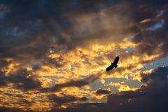 Vol d'Eagle sur le coucher du soleil Image stock