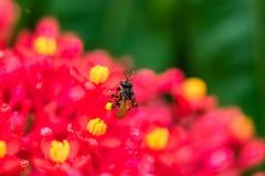 Vol d'insecte photographie stock libre de droits