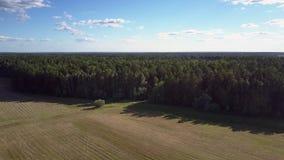 Vol d'oeil d'oiseau au-dessus de forêt épaisse illimitée par le champ d'herbe banque de vidéos