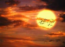 Vol d'oiseau Photos libres de droits