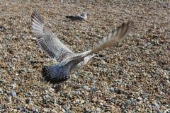 Vol d'oiseau Image stock