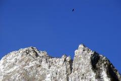Vol d'oiseau au-dessus d'une crête de montagne Photos stock