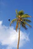 Vol d'oiseau au-dessus de l'arbre Image stock