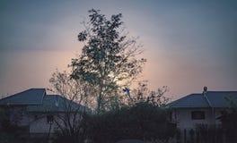 Vol d'oiseau, coucher du soleil à la campagne photos libres de droits