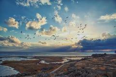 Vol d'oiseau dans le coucher du soleil Images libres de droits